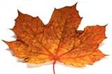 Autumn market movement